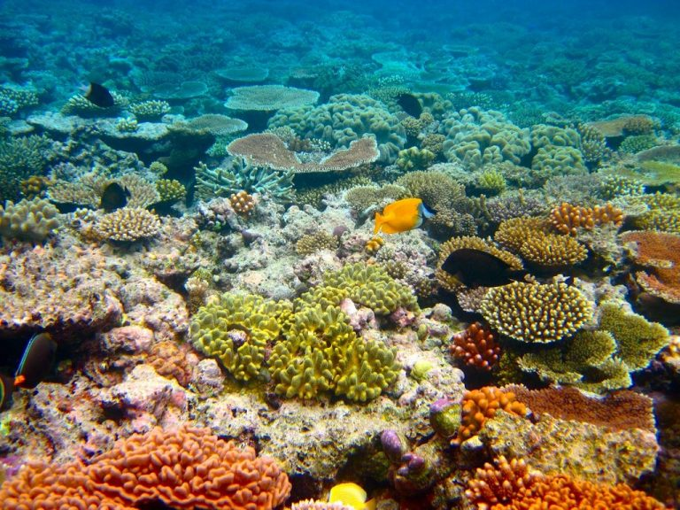 The Great Barrier Reef - Kyle Taylor
